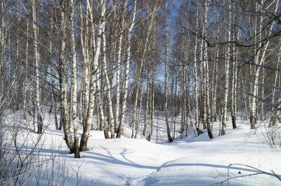 Quadro Paesaggio invernale con betulla bianca