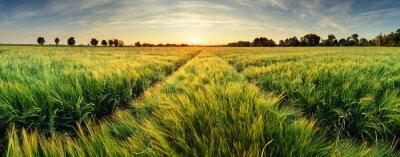 Quadro Paesaggio rurale con campo di grano al tramonto