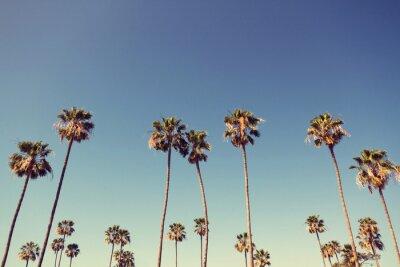 Quadro Palm Trees in Retro Style