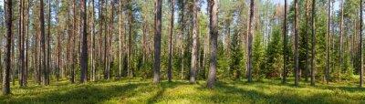 Quadro Panorama estivo foreste di conifere