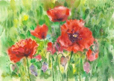 Quadro papaveri rossi fiori sfondo, acquerello.