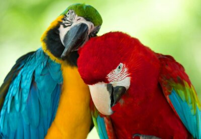 Quadro pappagalli
