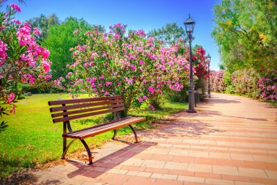 Quadro parco cittadino