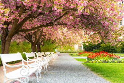 Quadro Park with blossom sakura, flower lawn and benches