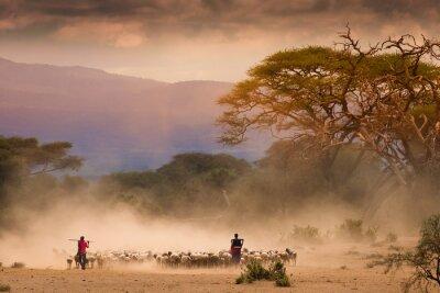 Quadro pastori Masai con le capre gregge og