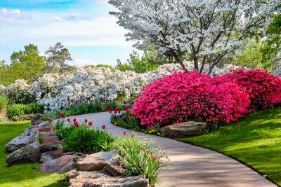 Quadro Percorso curvo attraverso le banche di Azeleas e sotto gli alberi di cornioli con tulipani sotto un cielo blu - Bellezza in natura