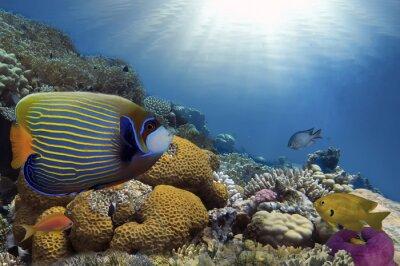 Quadro Pesci tropicali sulla barriera corallina