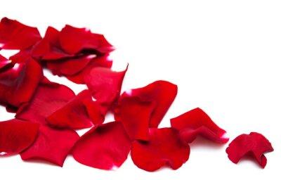 Quadro petali di rose rossi