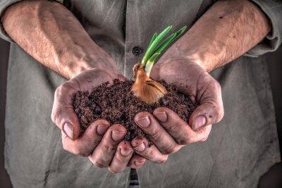 Quadro pianta in mani