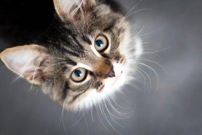 Quadro piccolo gattino birichino su sfondo grigio