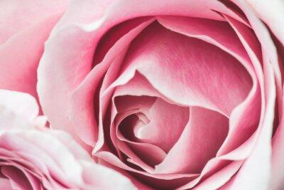 Quadro Pink Rose Fiore con profondità di campo e di messa a fuoco al centro del fiore di rosa