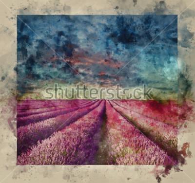 Quadro Pittura ad acquerello digitale di Stunning Summer sunset over lavender field landscape