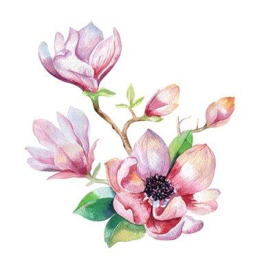 Quadro Pittura Magnolia fiore carta da parati. Disegnata a mano Acquerello floreale