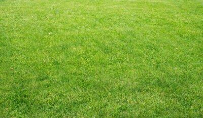 Quadro Prato verde