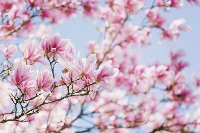 Quadro Primavera! Blooming Magnolia