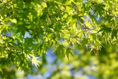 Quadro primavera albero