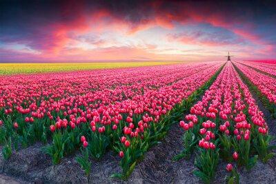 Quadro primavera scena drammatica in azienda tulipano