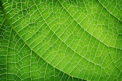 Quadro Primo piano di una foglia verde