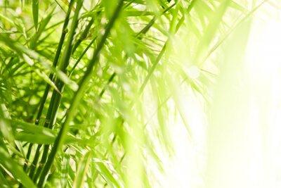 Quadro Priorità bassa di bambù verde