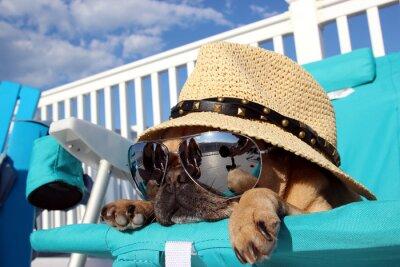 Quadro Pug di distensione in Beach Chair