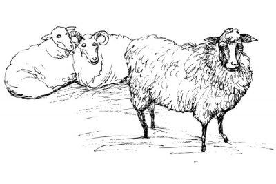 Quadro Ram e pecore