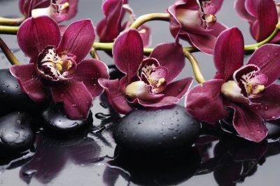 Quadro ramo di orchidea rossa con pietre di terapia