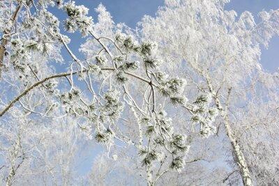 Quadro ramo di un albero di abete in inverno foresta