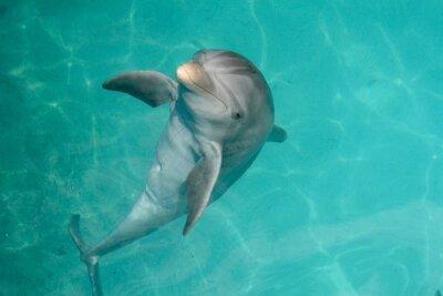 Quadro Repubblica Dominicana Dolphin