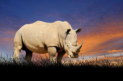 Quadro Rinoceronte sullo sfondo del cielo al tramonto