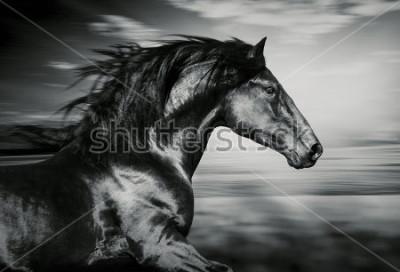 Quadro ritratto del cavallo corrente spagnolo, foto in bianco e nero
