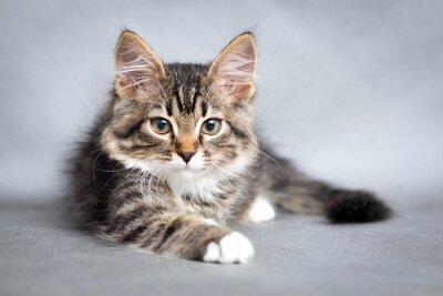 Quadro Ritratto di mentire gatto