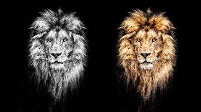 Quadro Ritratto di una bella leone, leone nelle pitture ad olio, scuri