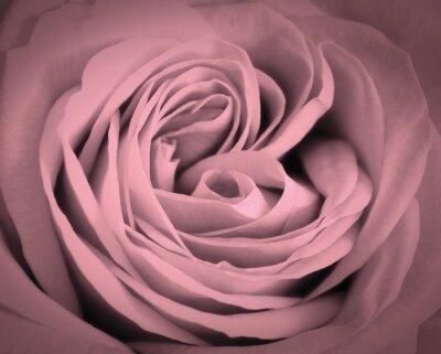Quadro Rosa rosa close-up di fondo. biglietto di auguri amore romantico