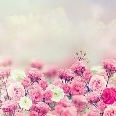 Quadro Rose Fiori