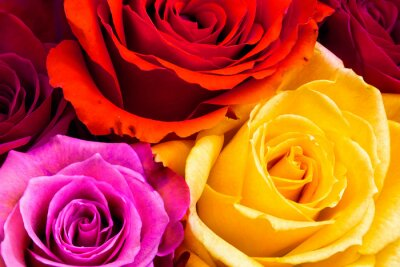 Quadro Roses sfondo