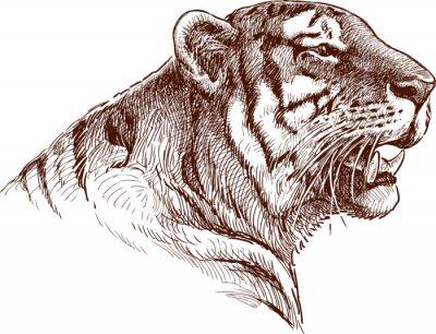 Quadro ruggente tigre