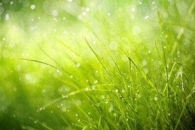 Quadro Rugiada di mattina su erba di primavera