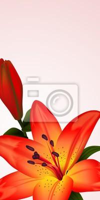 Quadro Scheda floreale o banner con il giglio bicolore