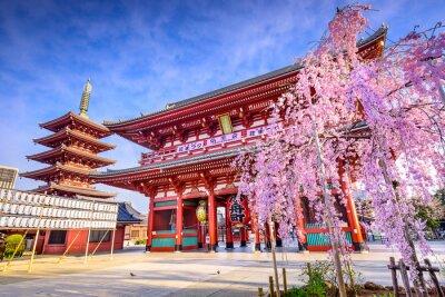 Quadro Sensoji Temple in Asakusa, Tokyo, Japan