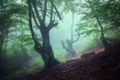 Quadro Sentiero attraverso una misteriosa vecchia foresta oscura in caso di nebbia. Autunno