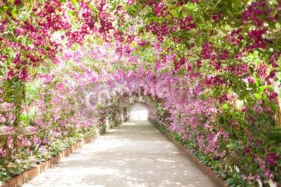 Quadro sentiero in un giardino botanico con orchidee costeggiano il percorso.