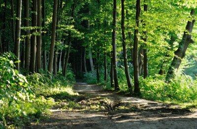 Quadro sentiero nel bosco