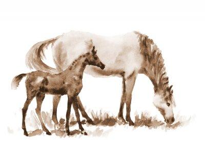 Quadro Seppia acquarello cavalla e puledro su bianco. Bella mano dipinta illustrazione di due cavalli sul campo.