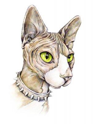 Quadro sfinge canadese in un collare con spine. gatto nuda su uno sfondo bianco. disegno ad acquerello