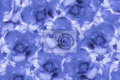 Sfondo Floreale Blu Chiaro Da Rose Composizione Di Fiori Fiori