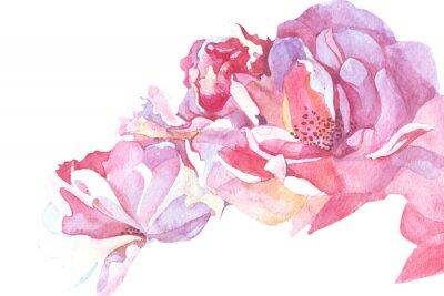 Quadro sfondo rosa acquerello illustrazione