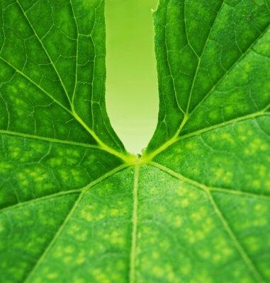 Quadro Sfondo verde foglia