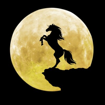 Quadro silhouette cavallo nero