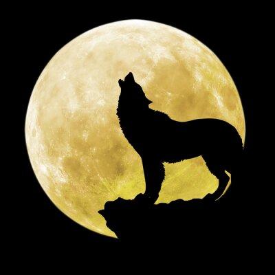 Quadro Silhouette di un lupo in davanti alla luna