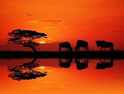 Quadro silhouette gnu al tramonto